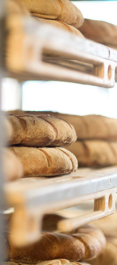 Bakhuys brood
